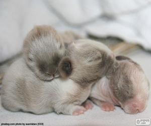 Rompicapo di Conigli neonati