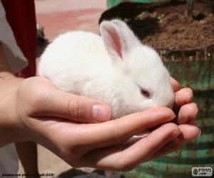 Rompicapo di Coniglietto bianco, mani