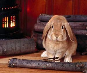 Rompicapo di Coniglio accanto al fuoco