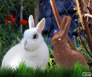 Rompicapo di Coniglio bianco e cioccolato