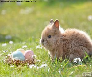 Rompicapo di Coniglio e uova di Pasqua