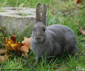 Rompicapo di Coniglio grigio