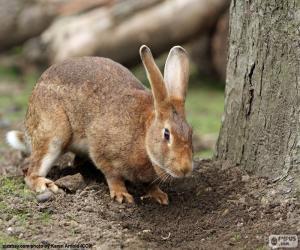 Rompicapo di Coniglio in cerca di cibo