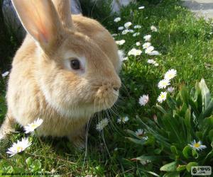 Rompicapo di Coniglio in primavera