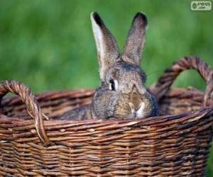 Rompicapo di Coniglio in un cesto di vimini