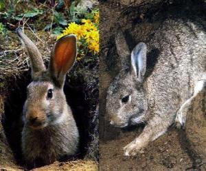Rompicapo di coniglio nella sua tana