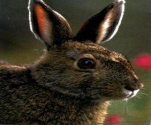 Rompicapo di Coniglio testa