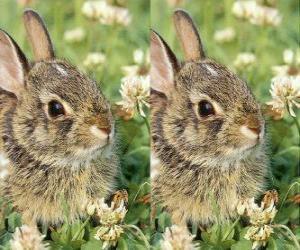 Rompicapo di coniglio timido