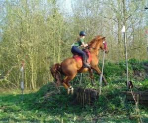 Rompicapo di Corso di tecnica equestre Concorrenza, mette alla prova la comprensione tra cavallo e cavaliere attraverso varie prove.