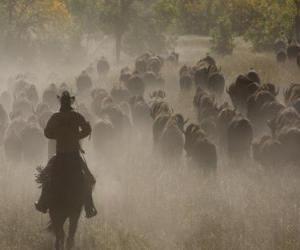 Rompicapo di Cowboy guida di un gregge