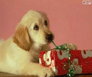 Rompicapo di Cucciolo che gioca con un nastro regalo
