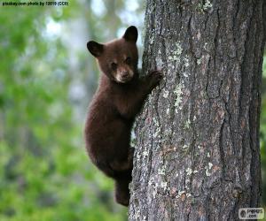 Rompicapo di Cucciolo di orso bruno si arrampica su un albero