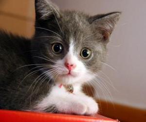 Rompicapo di Cute kitten