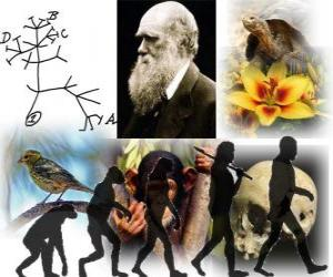 Rompicapo di Darwin Day, Charles Darwin nacque il 12 febbraio del 1809. Albero di Darwin, il primo schema della sua teoria dell'evoluzione
