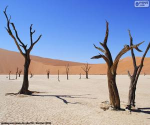 Rompicapo di Deadvlei, Namibia