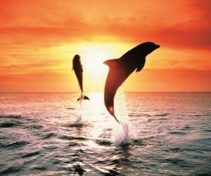 Rompicapo di Delfini al tramonto