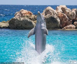 Rompicapo di Delfino facendo un trucco
