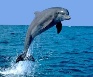 Rompicapo di Delfino