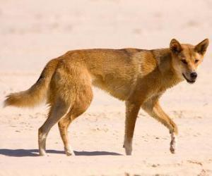 Rompicapo di Dingo