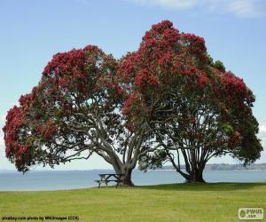 Rompicapo di Due alberi
