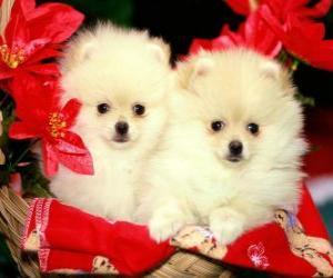 Rompicapo di due cani accanto a una piante di Natale