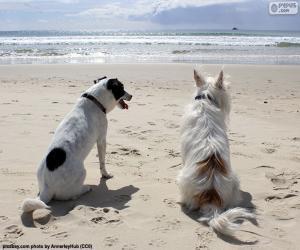 Rompicapo di Due cani sulla spiaggia