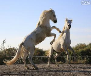 Rompicapo di Due cavalli bianchi