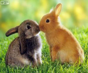 Rompicapo di Due conigli belle faccia a faccia