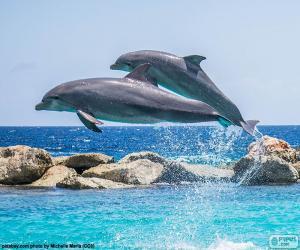 Rompicapo di Due delfini saltellanti