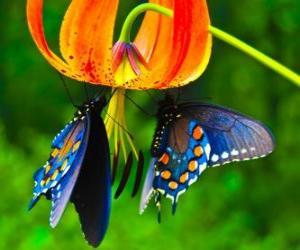 Rompicapo di Due farfalle su un fiore