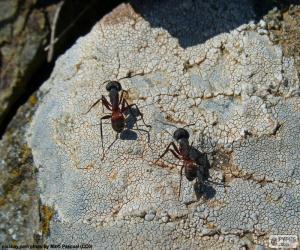 Rompicapo di Due formiche