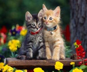 Rompicapo di due gatti con la collana