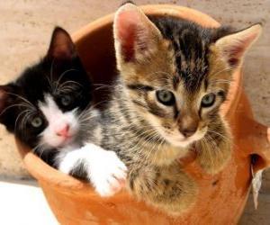 Rompicapo di Due gatti in un vaso