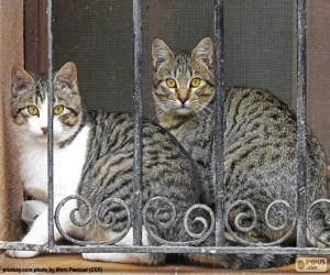 Rompicapo di Due gatti in una finestra