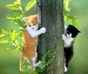Rompicapo di Due gatti su di un albero