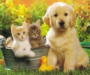 Rompicapo di due gattini con un cucciolo