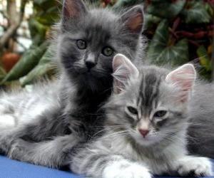 Rompicapo di Due gattini di riposo