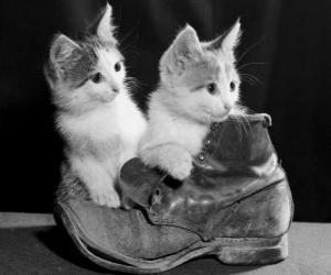 Rompicapo di Due gattini su di un avvio