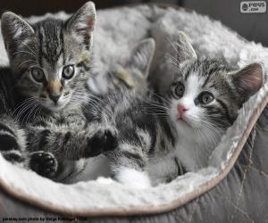 Rompicapo di Due gattini svegli