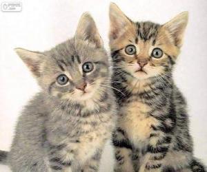 Rompicapo di Due gattini