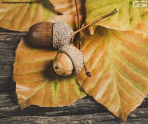 Rompicapo di Due ghiande e foglie autunnali