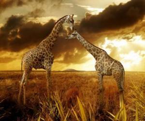 Rompicapo di Due giraffe al crepuscolo