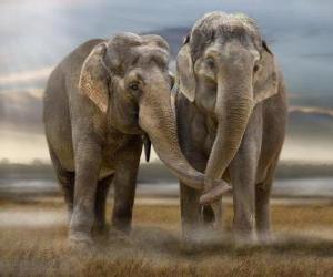 Rompicapo di Due grandi elefanti con tronchi intrecciati
