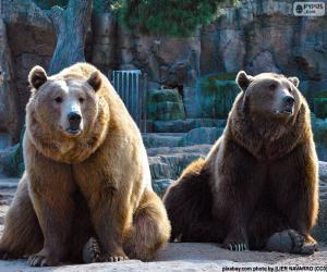 Rompicapo di Due orsi bruni