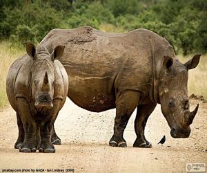 Rompicapo di Due rinoceronti