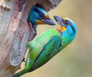 Rompicapo di due splendidi uccelli