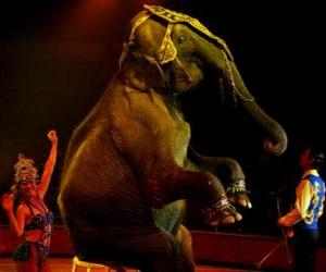 Rompicapo di Elefante al circo