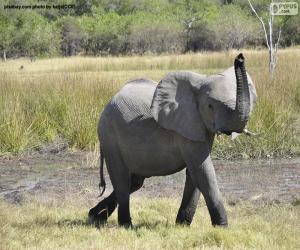 Rompicapo di Elefante con tubo ad alta