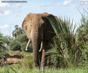 Rompicapo di Elefante nella giungla