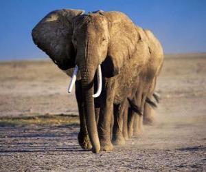 Rompicapo di Elefanti camminare in fila